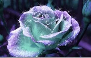 """Набор алмазной мозаики """"Фиолетовая роза - символ страсти"""""""