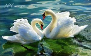 """Набор алмазной мозаики """"Пара лебедей"""""""