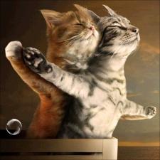 """Набор алмазной мозаики """"Титаник. Котики"""""""