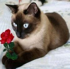"""Набор алмазной вышивки """"Сиамский котик с розой"""""""