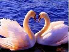 """Набор алмазной мозаики """"Два влюбленных лебедя"""""""