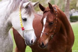 """Набор алмазной мозаики """"Две лошади"""""""