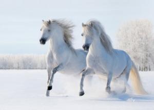 """Набор алмазной мозаики """"Пара белых лошадей"""""""