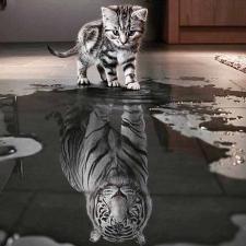 """Набор алмазной мозаики """"Котенок в отражении тигр. Поверь в себя"""""""