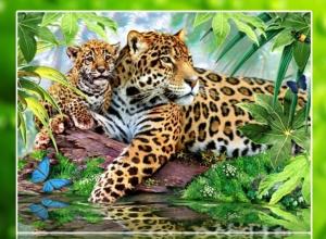 """Набор алмазной вышивки """"Леопарды. С любимой мамочкой"""""""