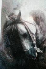 """Набор алмазной вышивки """"Лошадь"""""""