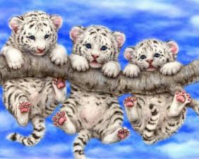 Набор алмазной вышивки Тигрята