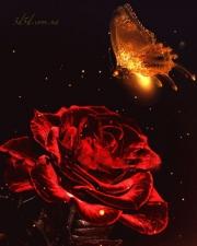 """Набор алмазной вышивки """"Бабочка и роза"""""""