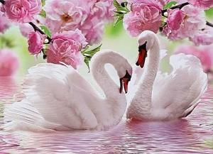 """Набор алмазной вышивки """"Два лебедя в розах"""""""