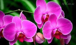 """Набор алмазной вышивки """"Изысканная орхидея"""""""