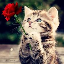 """Набор алмазной вышивки """"Котенок с розой"""""""