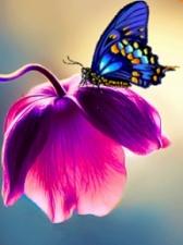 """Набор алмазной вышивки """"Синяя бабочка"""""""