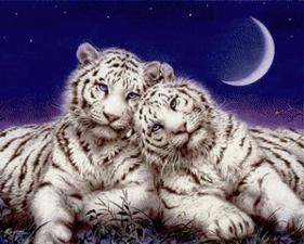 """Набор алмазной вышивки """"Тигры. Верность"""""""