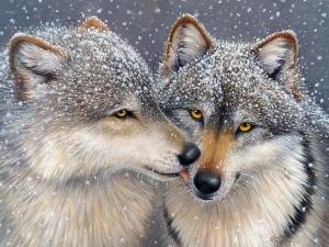 """Набор алмазной мозаики """"Волки. Милая парочка"""""""