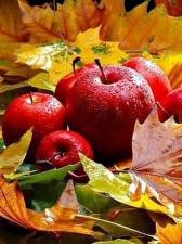 """Набор алмазной вышивки """"Яблоки в листьях"""""""