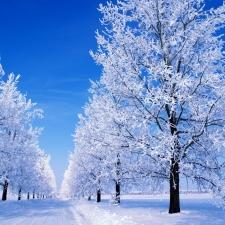 """Набор алмазной вышивки """"Зима. Иней"""""""