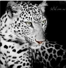 """Набор алмазной мозаики """"Черно-белый леопард"""""""