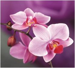 Набор алмазной вышивки Орхидея