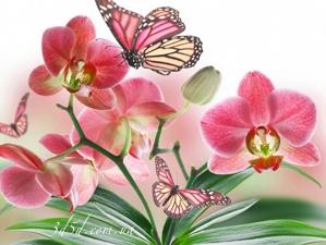 """Набор алмазной вышивки """"Бабочки и орхидея"""""""