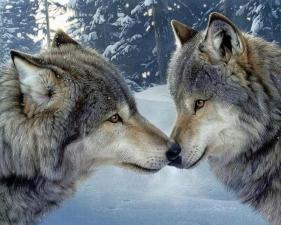 """Набор алмазной вышивки """"Волк и волчица"""""""
