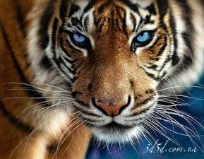 "Набор алмазной вышивки ""Тигр"""